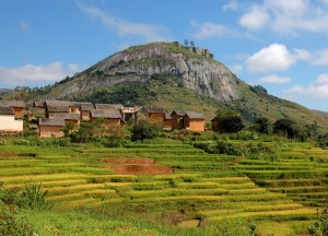 Reisfelder im Hochland