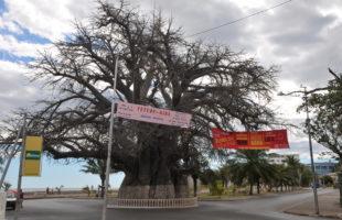 Baobab von Mahajanga