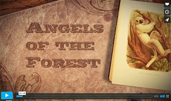 Mediathek - Angels of the forest