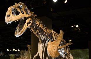Majungasaurus crenatissimus 4