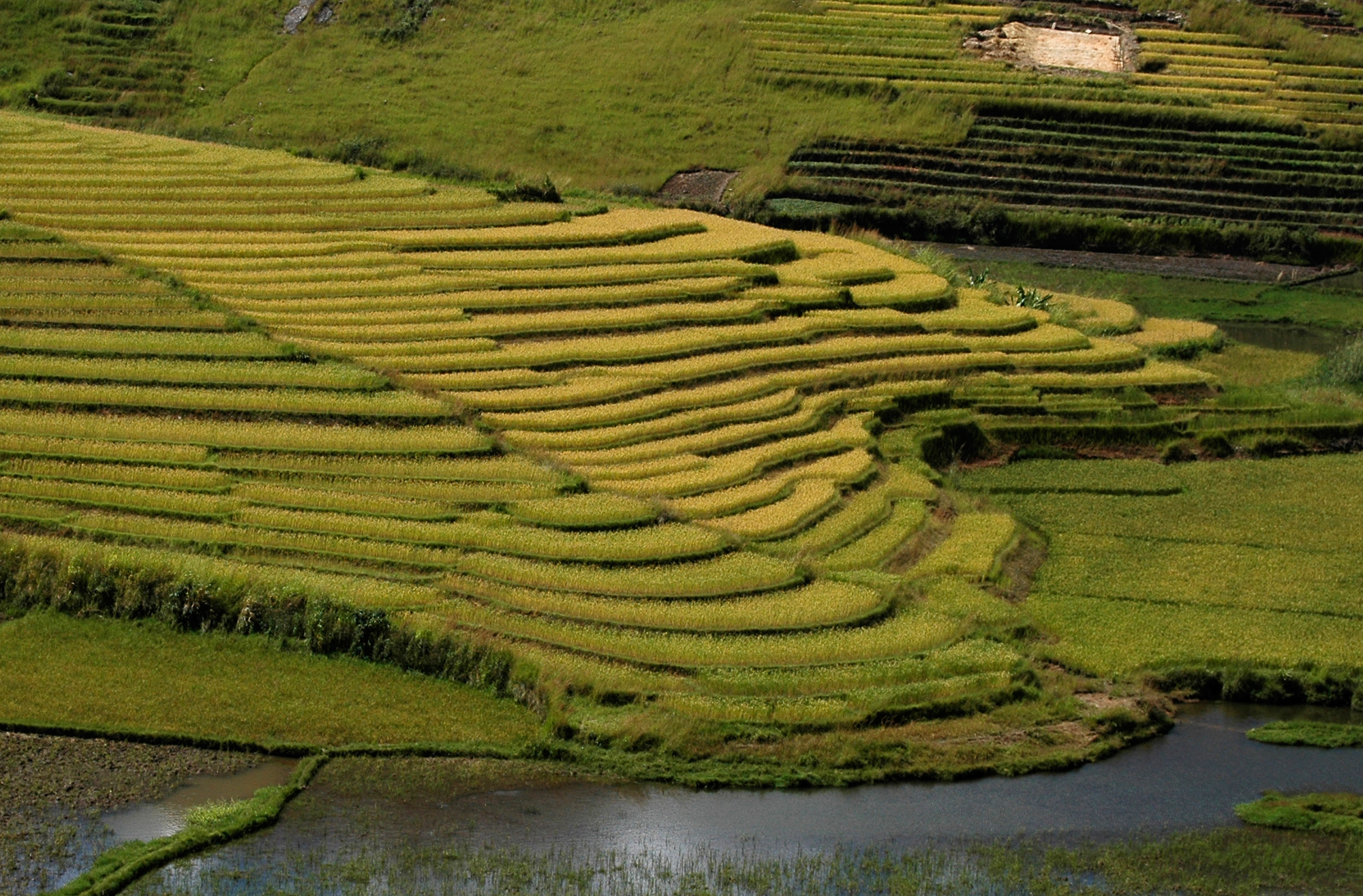 The Grain Of Life Rice Cultivation In Madagascar