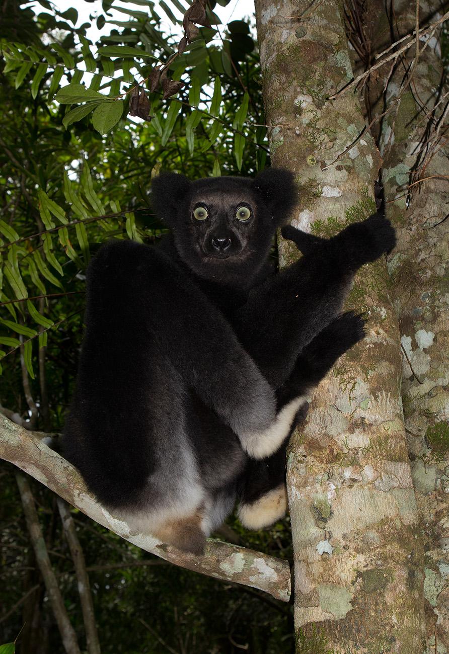 Mitsinjo Reserve Madamagazine