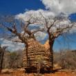 Baobab Mutter des Waldes