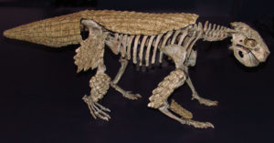 Simosuchus clarki
