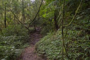 Ranomafana Nationalpark 1