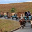 Zebu-Charettes im Hochland
