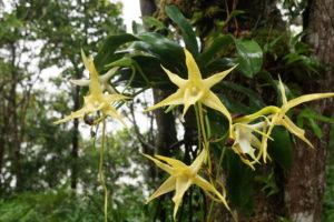 Stern von Madagaskar
