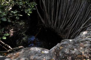 Leben Kalanoro in dieser Höhle?