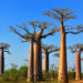 [:de]Das Land der Baobabs[:en]The country of Baobabs[:]